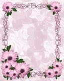 Floral border Purple Daisies Royalty Free Stock Photos