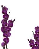 Floral border Purple Orchids  Stock Photo