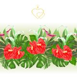 Floral border seamless background with blooming lilies Cala and anthurium, palm,philodendron and ficus vector Illustration for use. In interior design, artwork Stock Photos