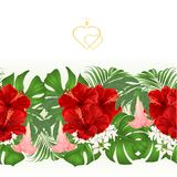 Floral border seamless background bouquet with tropical flowers  floral arrangement, with red hibiscus, palm,philodendron and Brug Stock Photography