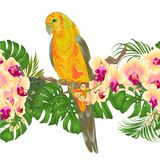 Floral border seamless background and Sun Conure Parrot standing on a yellow orchid Phalaenopsis and palm, phiodendronon on a whi. Te background vector Royalty Free Stock Photo
