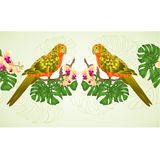 Floral border seamless background  Sun Conure Parrot tropical exotic bird   with beautiful yellow orchid and philodendron vector i. Llustration editable hand Stock Photo