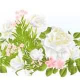Floral border seamless background with white Roses festive background vintage vector Illustration for use in interior design,. Floral border seamless  background Royalty Free Stock Photography