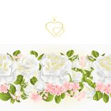 Floral border seamless background white Roses  vintage vector Illustration for use in interior design, artwork, dishes, clothing,. Greeting cards Stock Photo