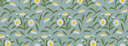 Floral border. Seamless pattern with chamomiles and leaves on a blue background Stock Photography