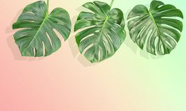 Floral border tropical Monstera leaves vintage toned. Floral border tropical plant Monstera leaves Vintage style toned picture royalty free stock image