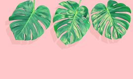 Floral border tropical Monstera leaves white background. Floral border tropical plant Monstera leaves on pink background. VIntage style toned picture royalty free stock image