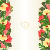 Floral border vertical with blooming various hibiscus and tropical leaves vector Illustration flower background with place for y. Our text greeting cards Stock Photos