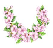 Spring Blossom. Cherry pink flowers. Blooming branch. Floral border. Watercolor illustration. Spring symbol. First flowers. Spring is comming Royalty Free Stock Images
