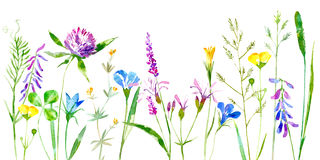 Floral border of a wild flowers and herbs on a white background. Royalty Free Stock Photo