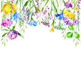 Floral border of a wild flowers and herbs on a white background. Buttercup, clover,bluebell,vetch,timothy grass,lobelia,spike. Watercolor hand drawn vector illustration