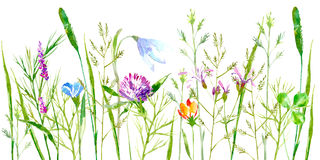 Floral border of a wild flowers and herbs on a white background. Buttercup, clover,bluebell,vetch,timothy grass,lobelia,spike. Watercolor hand drawn royalty free illustration