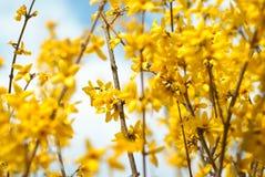Floral Border yellow Flower Royalty Free Stock Photos