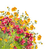 Floral border of yellow and red flowers,isolated Stock Images