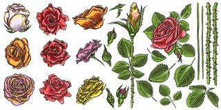 Floral bouquet design elements with garden red roses flowers on stock illustration