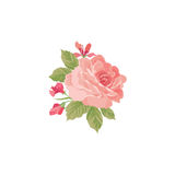 Floral bouquet isolated. Flower rose posy greeting card design element. Royalty Free Stock Image