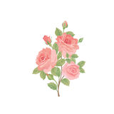 Floral bouquet isolated. Flower rose posy greeting card design element. Stock Photo