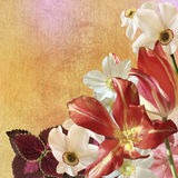 Floral bouquet on worn golden background Royalty Free Stock Photos
