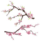 Floral branch series Royalty Free Stock Photo