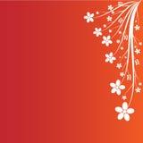 Floral branco no fundo alaranjado vermelho Imagem de Stock Royalty Free