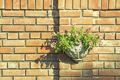 Floral on Brick Wall Stock Photography