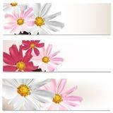Floral brochures set for design Stock Photo