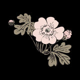 Floral bush retro on black background , hand drawn decorat Royalty Free Stock Images