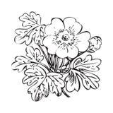 Floral bush retro black on white background , hand drawn d Stock Images