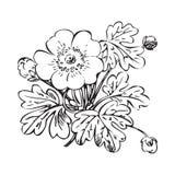Floral bush retro black on white background , hand drawn d Royalty Free Stock Photo