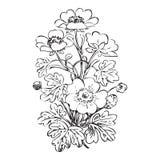 Floral bush retro black on white background , hand drawn d Stock Photos