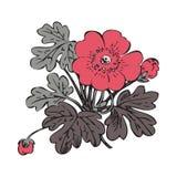 Floral bush retro on white background , hand drawn decorat Royalty Free Stock Image