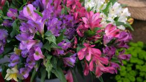 Fresh azalea flowers in vase with water drops, sale in flower shop closeup view.