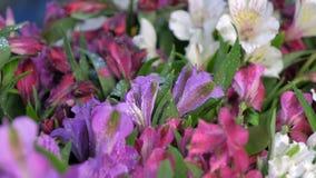 Fresh tender azalea flowers with water drops, sale in flower shop closeup view.
