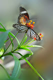 Floral butterfly habitat contention. Eastphoto, tukuchina,  Floral butterfly habitat contention Royalty Free Stock Images