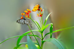 Floral butterfly habitat contention. Eastphoto, tukuchina,  Floral butterfly habitat contention Stock Photography