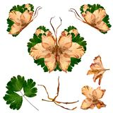 Floral butterfly made from bizarre curved extruded dried lily pe. Tals dry gladiolus flower and assembly elements Stock Images