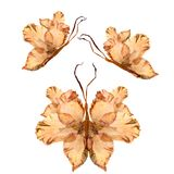 Floral butterfly made from bizarre curved extruded dried lily pe. Tals drygladiolus  flower Stock Photos