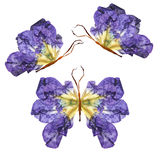 Floral butterfly made of flowers. Floral butterfly made from bizarre curved extruded dried lily petals dry iris flower Stock Photos
