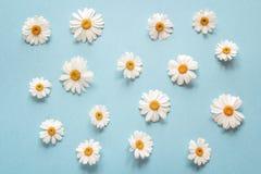 Floral camomile σχέδιο σε ένα μπλε υπόβαθρο Στοκ Φωτογραφίες