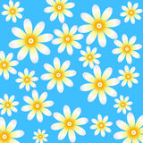 Floral camomile pattern. Floral pattern with camomiles on blue background Royalty Free Stock Photography