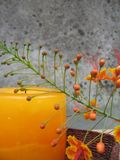 Floral candle still life Royalty Free Stock Images