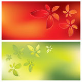 Floral card backgrounds Royalty Free Stock Photography