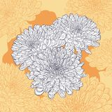 Floral card with chrysanthemum Stock Image