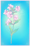 Floral card. EPS 10. Contains transparency and gradients Stock Photography