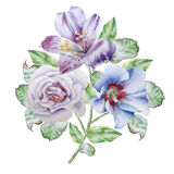 Floral card with flowers. Alstroemeria. Rose. Watercolor illustration. Royalty Free Stock Image