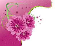 Floral card with flowers malva - eps. Beautiful card with flowers malva - vector Stock Image