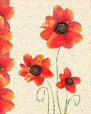 Floral card of isolated red poppy on decorative paper background. Vintage hand drawn Invitation. Floral Card Design Stock Photo