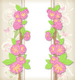 Floral card with peach flowers Royalty Free Stock Photos