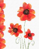Floral card with  red poppy on white background. Stock Images