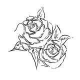 Floral card with roses, vintage line art black and white vector illustration EPS10 Royalty Free Stock Photo